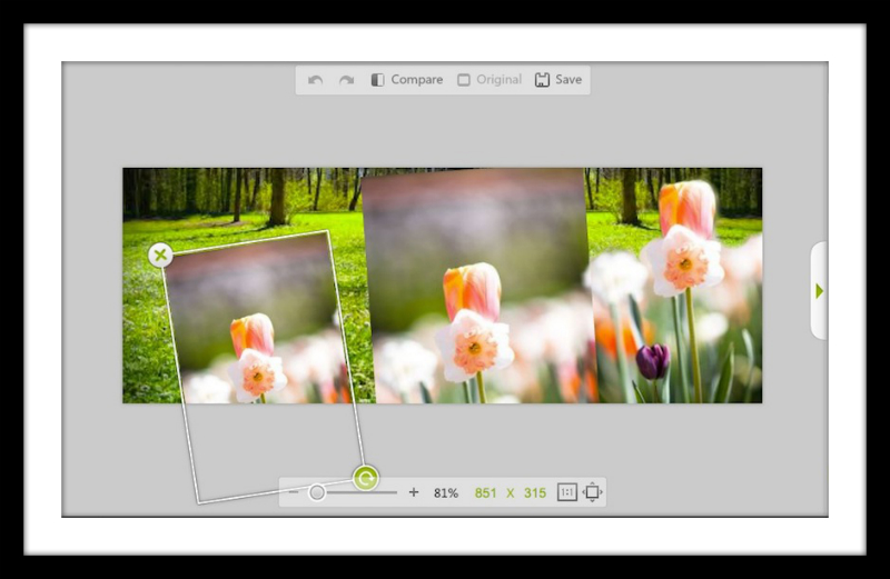 Spring flowers montaged onto grassy background
