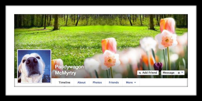 Spring Facebook cover photo