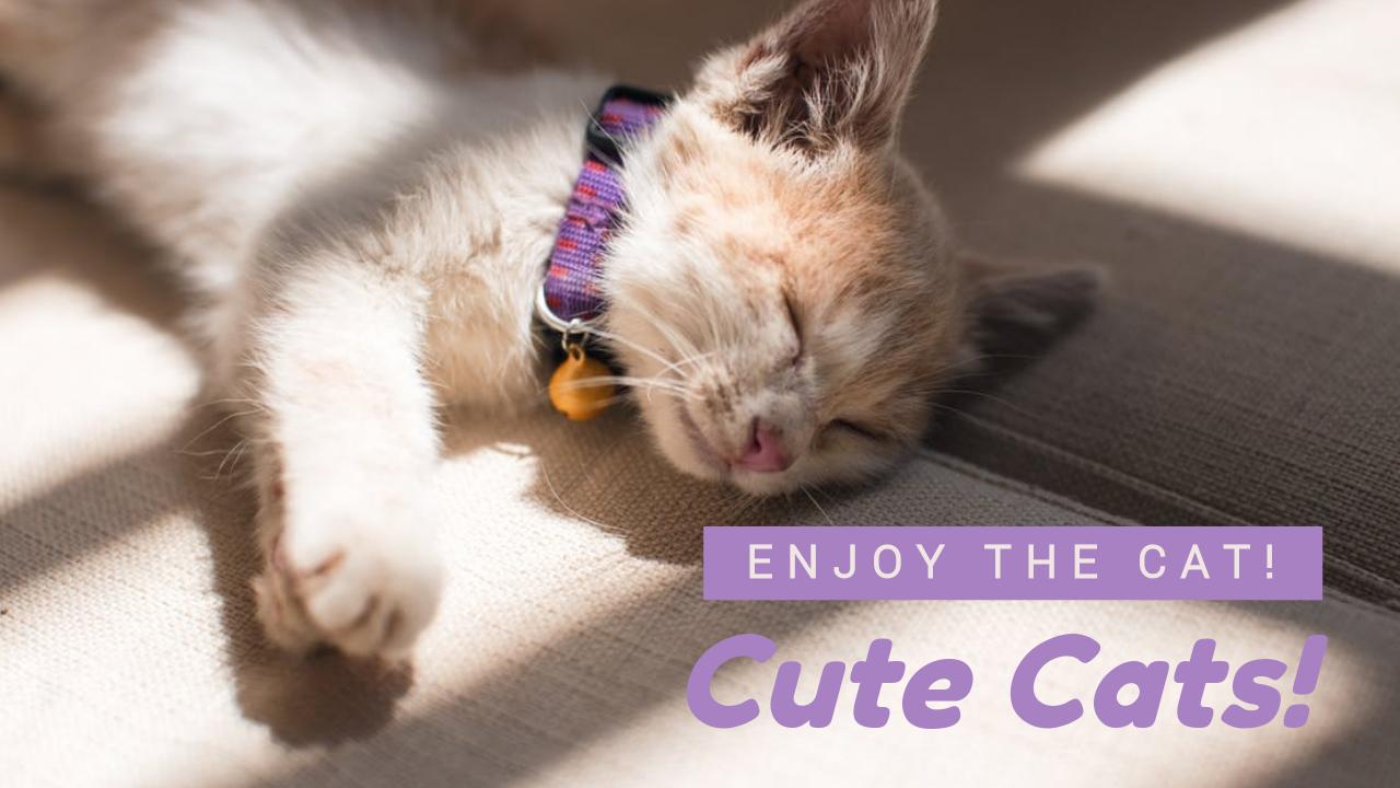 cute cats youtube thumbnail